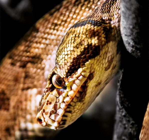 Simili cuir Aythana Cobra Skai